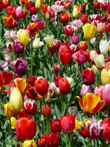 Frühling = Lust auf Veränderung